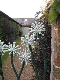 Detail from a garden gate - Leeks in flower